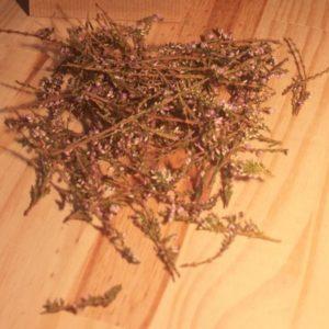 La plante la bruyère