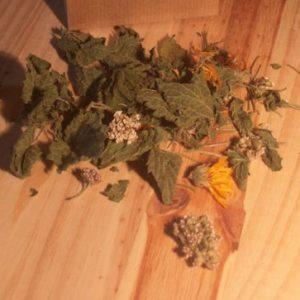 assortiments des plantes du matin.