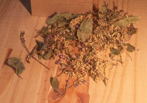 assortiments des plantes de la souplesse.