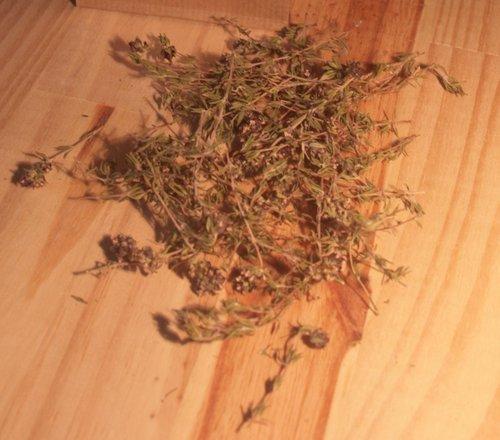 La plante, le thym
